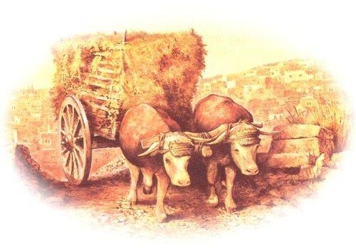 ox wagon