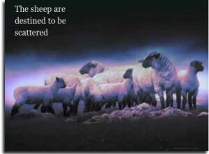 sheep-scattered