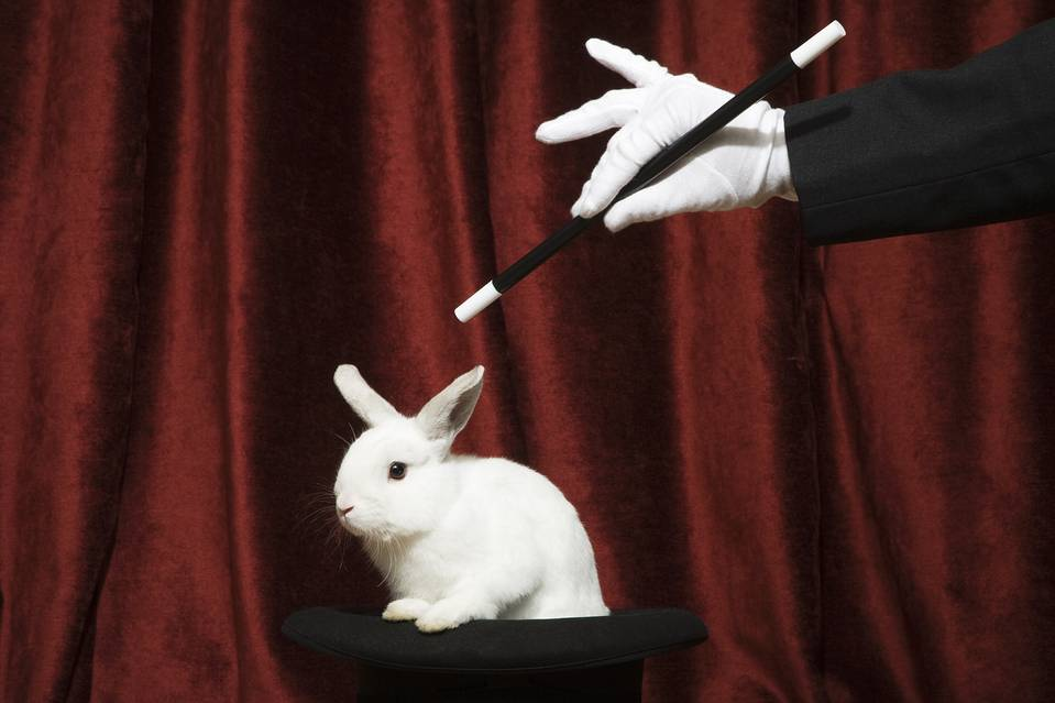 Magician pulls rabbit out of the hat